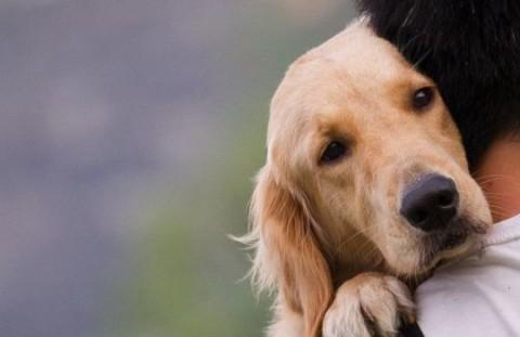 abbraccio padrone cane