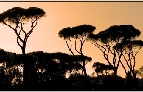 alberi-roma