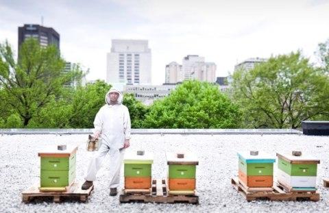 apicolutura urbana