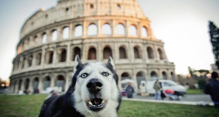 cane roma