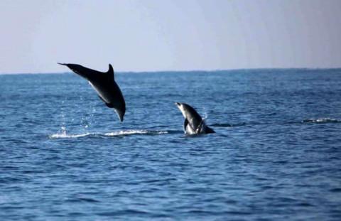 delfini-ostia-dsr